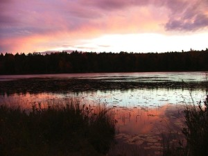 The Importance of Wetlands to Maine Lakefront Property Owners