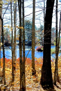 Leaf Disposal At Your Maine Lakefront Property