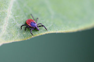 Protecting Your Family during Tick Season
